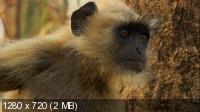Секреты дикой Индии / Secrets of Wild India (2011) BDRip 720p + HDRip