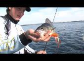 Рыбачьте с нами. Видеоприложение. Выпуск №45. Май / 2013