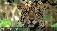 ����������� �������� / Secret Brazil (2012) HDTV 1080i + HDTVRip