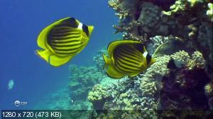 Жизнь морских обитателей / Fish Life (2010) HDTV 720p