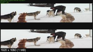 http://i46.fastpic.ru/thumb/2013/0519/f6/9c14757c9053bc583236d34202e8d4f6.jpeg